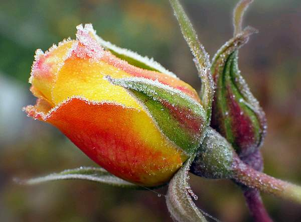 自然之美 - 萧思坚工作室 的日志 - 网易博客 - 流通 - 流通博客