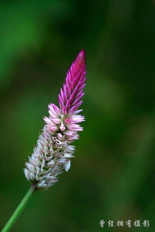 (原创摄影)森源小花 - 曾经拥有 - 我的摄影花园