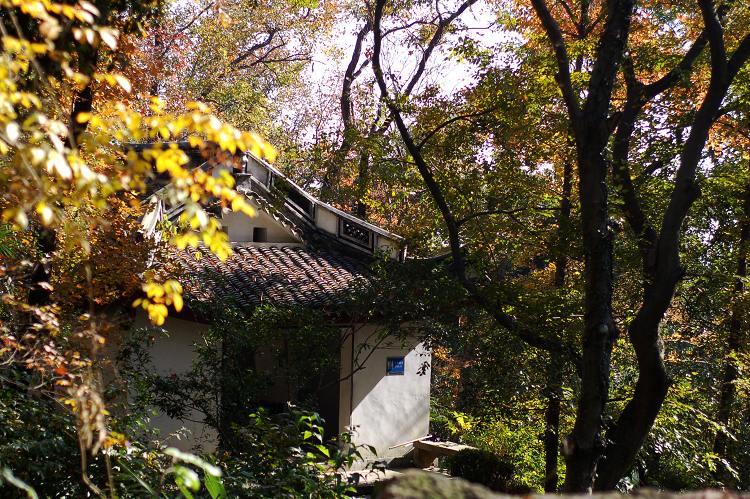 原创【初冬保国寺】 - 阿新 - 阿新原创摄影小屋
