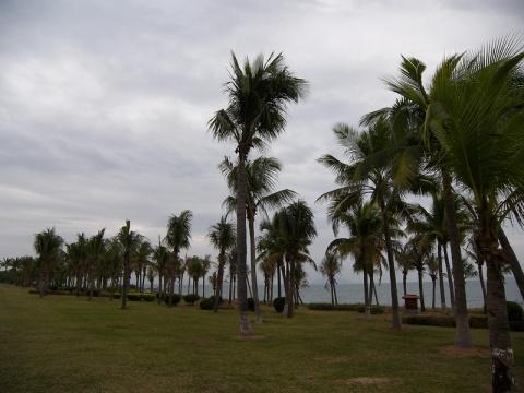 三亚湾椰林 - daikang390505 - 我的博客