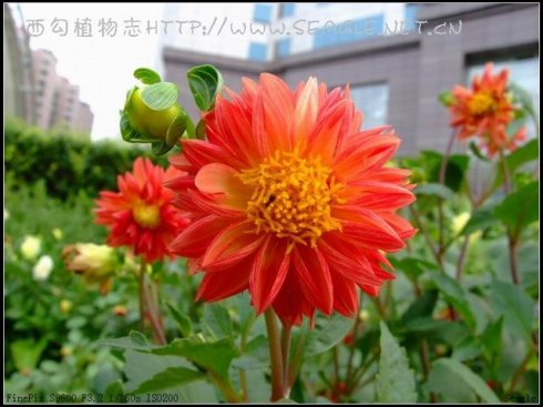 常见观赏植物(三) - 黑白 - 黑白的博客