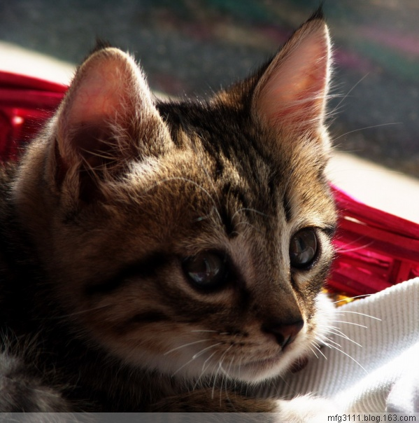 【原创】家有猫咪三部曲 - 屲林坡 - 屲林坡的博客
