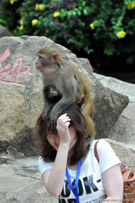 猴岛:流氓猴和生气鱼