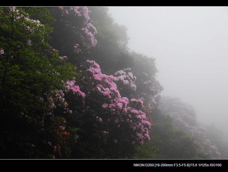 走过春天___武夷山、梧桐山 - 西樱 - 走马观景