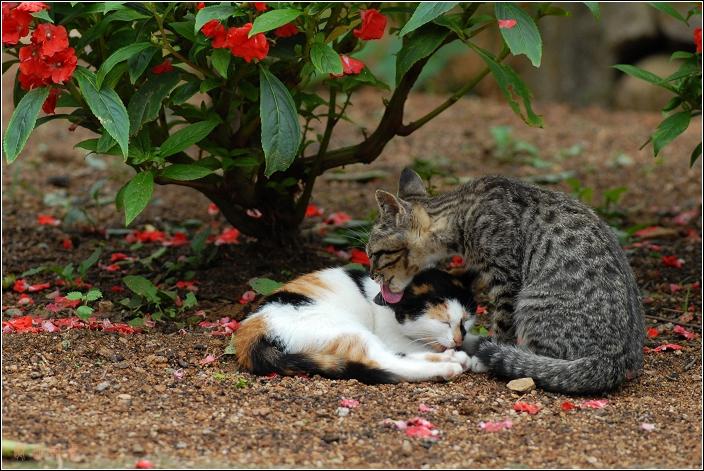 [原创]幸福的小猫 - 迁徙的鸟 - 迁徙鸟儿的湿地