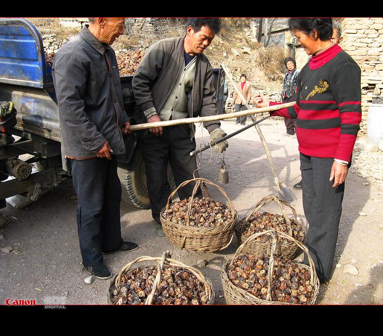 盘龙山,收柿饼 - 漂泊   - 漂泊的博客