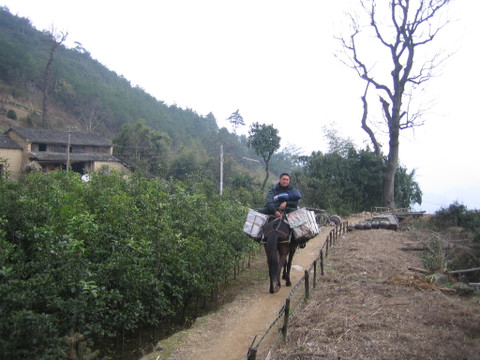 马坑等(照片) - 江村一老头 - 江村一老头的茅草屋