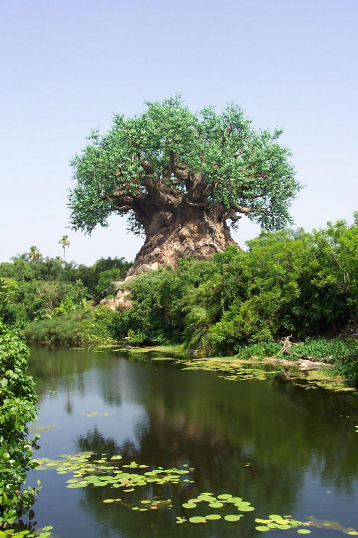 世界上最惊世骇俗的一棵大树【組圖】 - AAA级私秘视频馆 - jb.cb.cb.cb 的博客