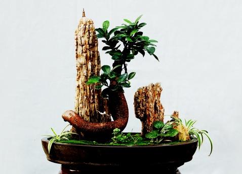 中国.山东《青州盆景》刊登的图片(16幅)   - 夕阳乐博园 - 夕阳乐博园