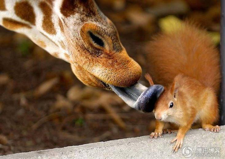 不容易拍到的动物精彩瞬间 - anxiang19761226 - anxiang1223 的博客