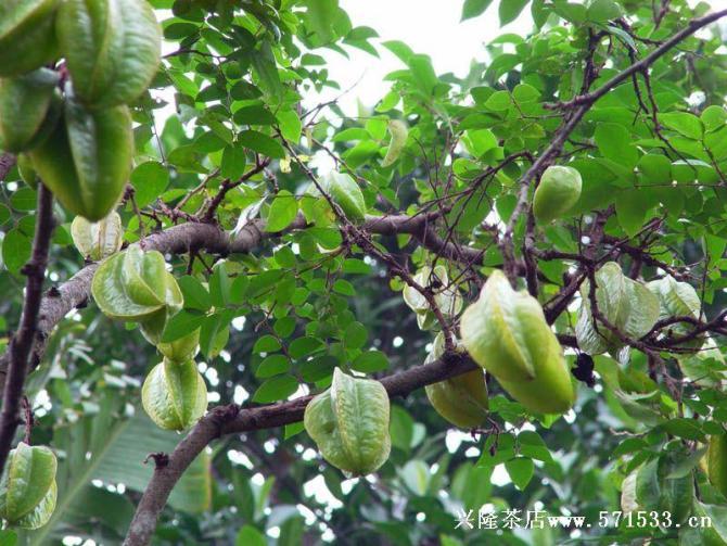 各种水果的药理作用 - 温柔细雨 - 一丝小雨盈盈而落......