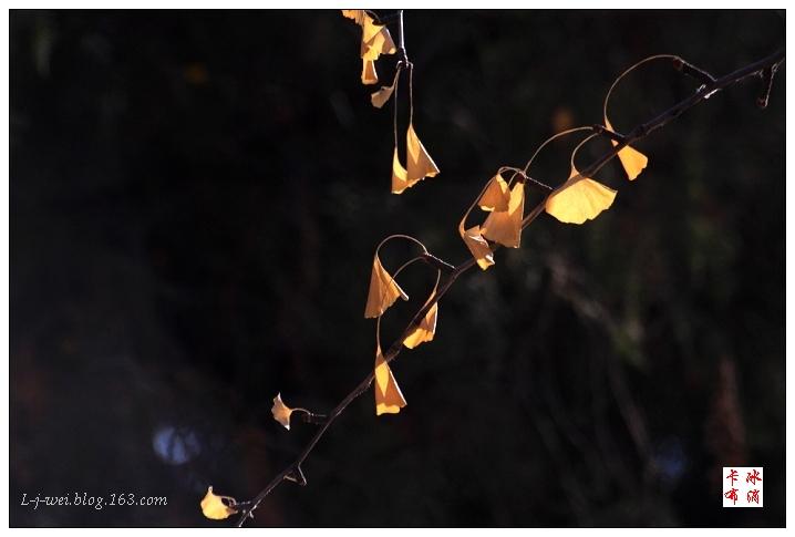 公园里那一点点黄(原创摄影) - 冰滴卡布 - l-j-wei的个人主页