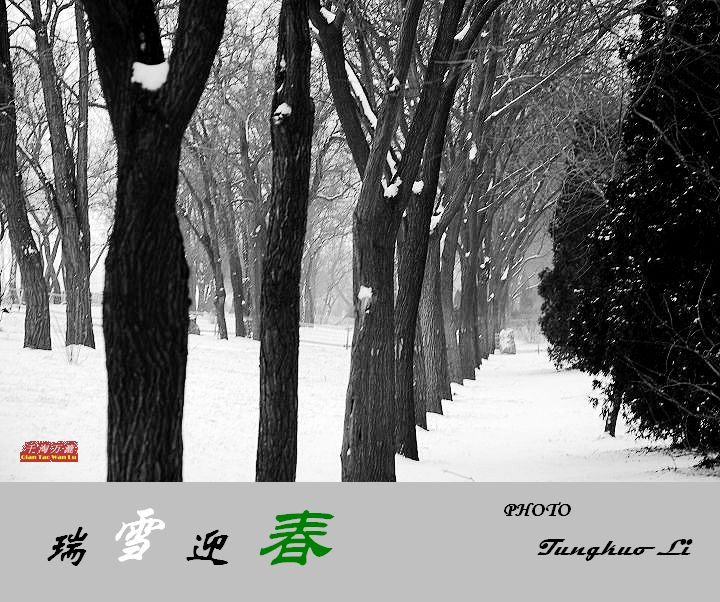 瑞雪迎春(PIC Original) - 千淘万漉 - 千淘万漉 de 花果山
