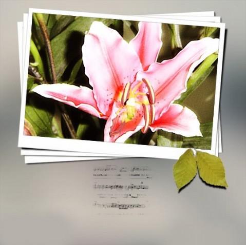 【春花灿烂】~2007春节家庭花花照片 - jelly - 果冻の彩~春色彩