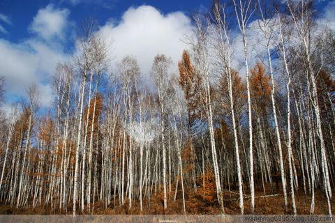 内蒙自驾游:秋天的童话 - 如果 - 我的博客