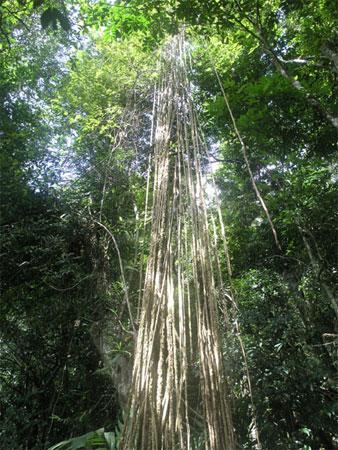 中国最美十大森林 - 阳光脚步 - 阳光下的精彩