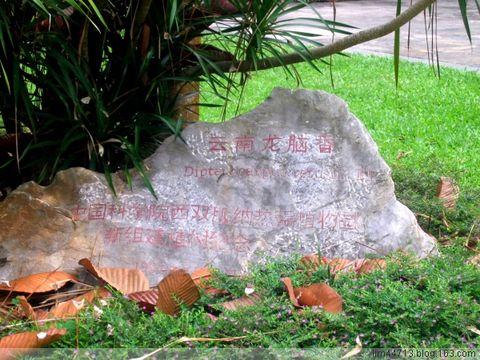 原创热带植物 - 兰州园丁ljm44713 - 我的博客原创照片,欢迎指导