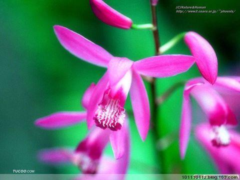 《原创》春来到 - 渫橆潇湘 - 渫橆潇湘的博客