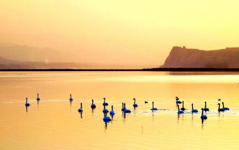 金色的天鹅湖 - 假深沉 - 假深沉的博客