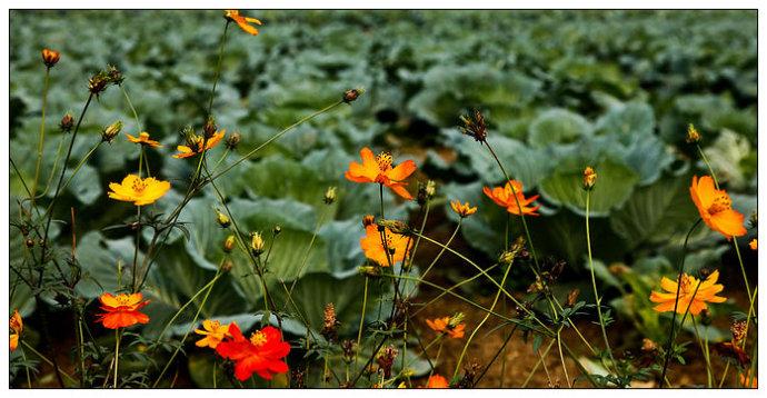 四川好玩   花香引来众蝶舞 - 牛筋 - 牛筋的博客