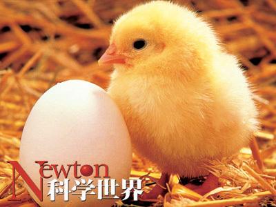 鸡蛋为什么是椭圆形的? - kxsj - Newton-科学世界