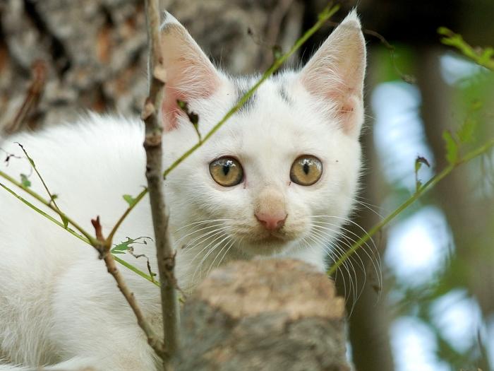 [原创]调皮的小猫 - 迁徙的鸟 - 迁徙鸟儿的湿地