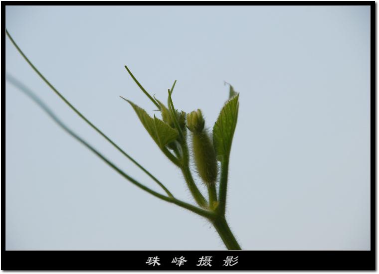 【原创】重游白河峡谷(4/4) - 珠峰 - 走南闯北