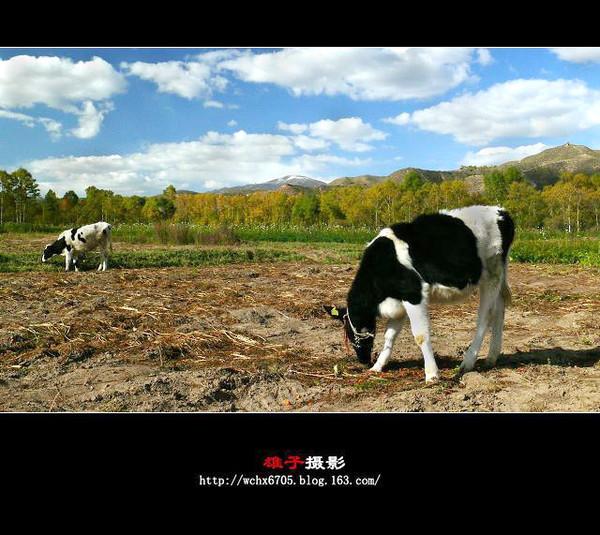 【原创摄影】一组并不牛的牛图 - 雄子 - 雄子言语