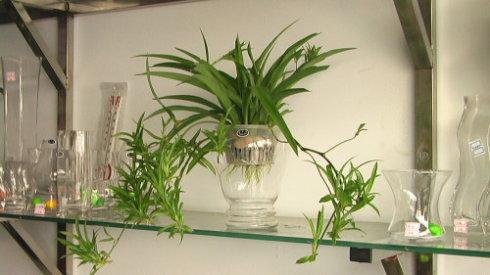 如何自制水培花卉营养液?
