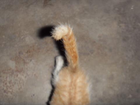 楼下的猫猫 - 摸神 - 猫猫和愉快的伙伴们