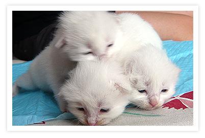 帮朋友送小猫猫 - cafe - 许宁的博客 cafe blog