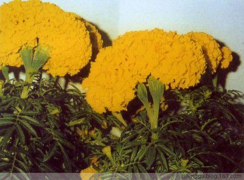 跨世纪的那氏齐齐发 - 江苏省丰谷种业有限公司 - 江苏省丰谷种业有限公司