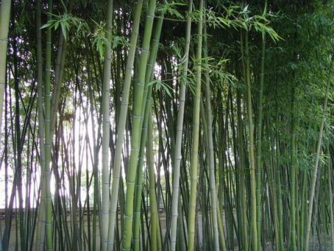 【中国博客文化艺术节】组图诗文投稿:生命(一) - 轻风 - 心灵驿站~ * ~轻风家园......