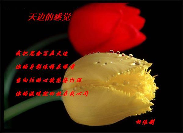 羞答答的玫瑰静悄悄的开 - huguangpinggg - 一帘幽梦
