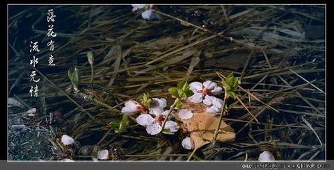 季节速写 - 艾之宁耶 - 自由与和平.博客精神
