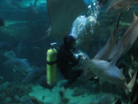 长沙海底世界(原) - 人在旅途 - 净土的博客