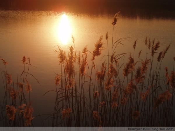 初冬の芦苇 - 欢颜 - 欢颜的博客