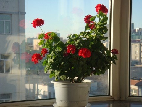 我的花花草草 - 五味人生 - 五味人生的博客