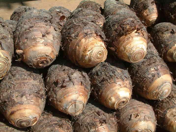 最适合冬天吃的10种养生蔬菜 - 几度夕阳红 - 乡情悠悠.青山依旧