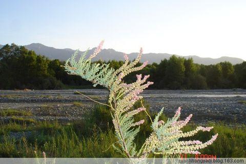 心灵对接.续二.朋友(疏勒河的红柳原创) - 疏勒河的红柳 - 疏勒河的红柳