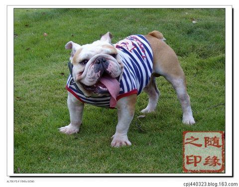 上方山欢乐宠物节 - 随缘 - 学 而 时 习 之,不 亦 悦 乎。