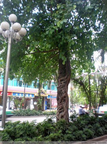 【转载】原创景洪街景(兰州园丁摄于云南) - 兰州园丁ljm44713 - 我的博客 《原创照片,欢迎指导》