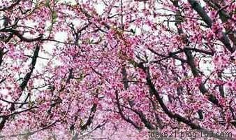 【原创】嫁与春风不用媒 - 我善藏石 - 我善藏石的博客