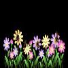 最全最漂亮的花儿及花边透明flash动画效果