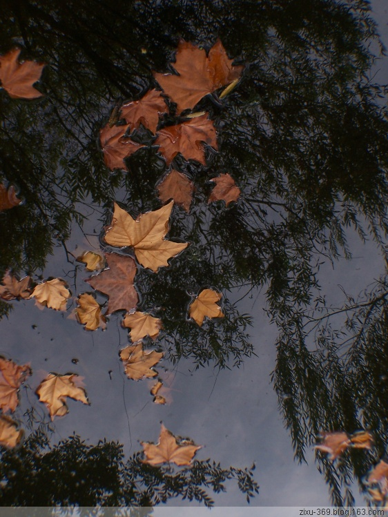 自然顶光----秋 - 随风而去 - 大静则成虚 虚无则成静 化大静而成大美