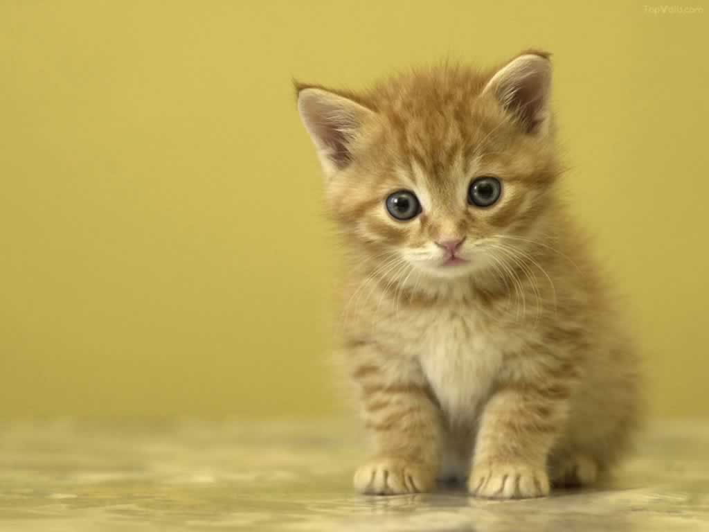 宠物的选择 - 靓影美体养生堂 - 康复美体养生馆的博客
