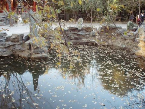 初冬恭王府 - 饺子 - ......秘密花园......