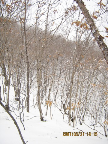 【原】雪中情B - 太极 - 太极---天时地利人和