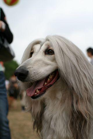 狗·鱼 - 光牙 - 八云之云