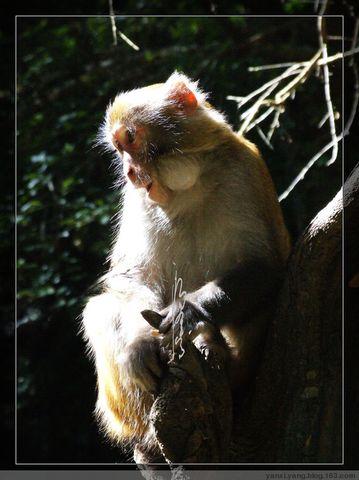 〔原创摄影12幅〕石宝山猴趣 - 烟溪杨 - 烟溪.杨 的原创摄影博客
